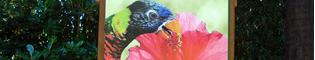 Makamanu Garden: Visita este jardín lleno de loros del Arco Iris, en la zona del Makamanu de la Polynesia de PortAventura.